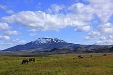 IJslandse paarden voor de Hekla Foto: Henk Bouwhuis